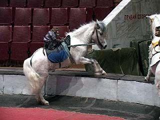 Цирковая семья Филатовых завершает гастроли в Воронеже