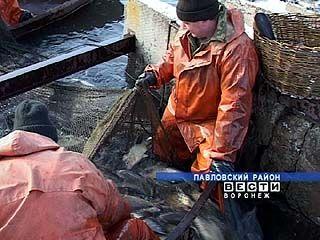 У рыбаков и сотрудников рыбоводческих хозяйств полное раздолье