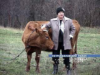 У жителей районов Воронежской области всё чаще воруют скот