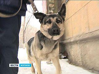 У зоозащитников паника - догхантеры угрожают открыть охоту на собак