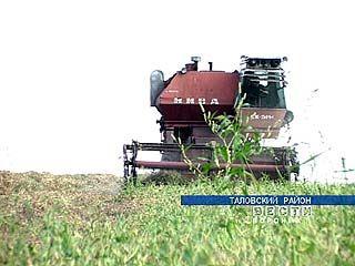 Уборка зернобобовых в области началась раньше срока на три недели