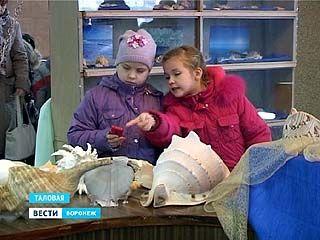 Удивительный мир моллюсков - в историко-краеведческом музее Таловой