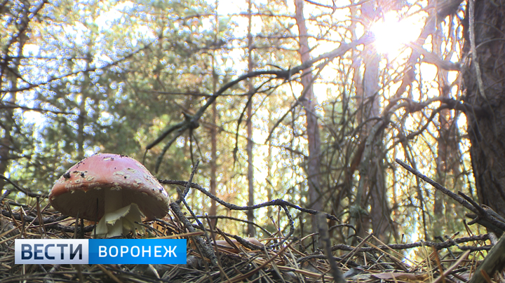 Воронежские врачи об отравившихся грибами 5 детях: «Младшему ребёнку – 2 года»