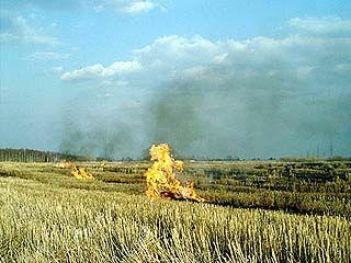 В 24-х хозяйствах области выявлены случаи сжигания стерни и остатков соломы