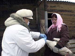 В 4-х районах области завершена вакцинация домашней птицы