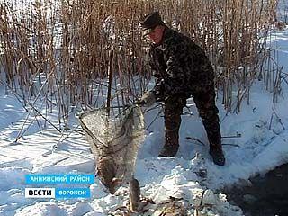 В Аннинском районе на реке Битюг зафиксирован массовый замор рыбы