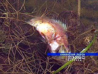 В Аннинском районе появился мертвый пруд