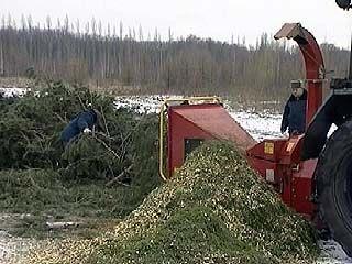В Белгороде решили проблему утилизации елок