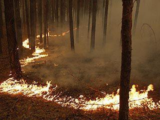 В Биосферном заповеднике на территории Липецкой области загорелась лесная подстилка