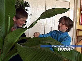 В Бобровском районе выращивают экзотические растения