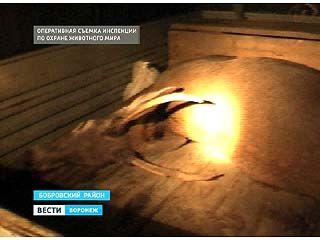В Бобровском районе задержаны браконьеры, убившие благородного оленя