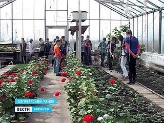 В Богучарской школе ╧2 есть огромная оранжерея