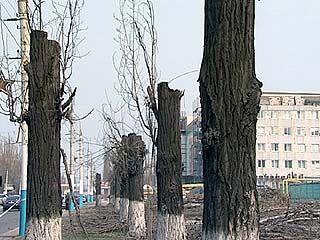 В борьбе за красоту автостоянки изуродовали Ленинский проспект