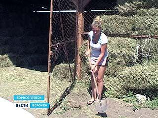 В Борисоглебске много лет практикуются трудовые отряды из детей и подростков