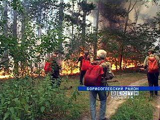 В Борисоглебском районе серьезно пострадал Теллермановский лес