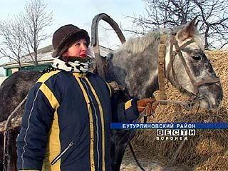В Бутурлиновском районе почту развозят на лошадях