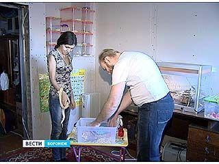 В доме у воронежцев Алексея и Екатерины Чалых обитают 22 змеи