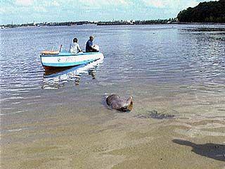 В этом году на водоемах региона утонуло 80 человек