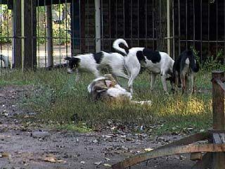 В этом году от укусов собак пострадали три тысячи воронежцев
