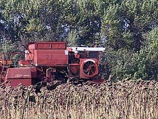 В этом году ожидается рекордный урожай подсолнечника и сахарной свёклы