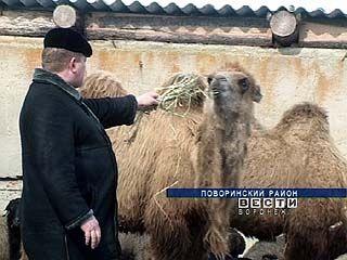 В фермерских хозяйствах области начали разводить экзотических животных