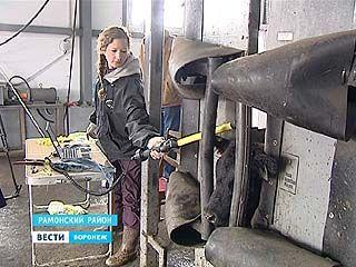 В фермерских хозяйствах Воронежской области - поголовная диспансеризация