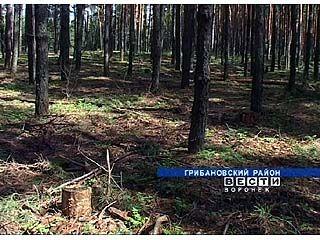 """В Грибановке ищут ответ на вопрос """"Чей лес?"""""""