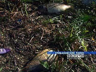 В Грибановском районе зафиксирована массовая гибель рыбы