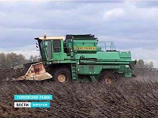 В хозяйствах Воронежской области пытаются спасти оставшийся урожай