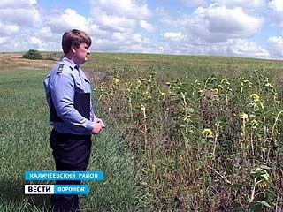 В Калачеевском районе проверили земли сельскохозяйственного назначения