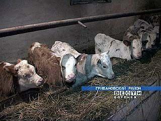 """В колхозе """"Россия"""" продолжают развивать животноводство"""