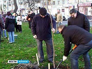 В Кольцовском бульваре высадили около 600 кустарников и молодых клёнов