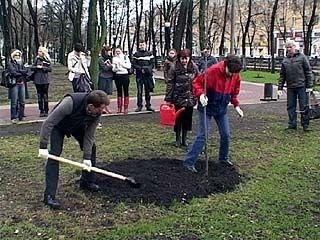 В Кольцовском сквере через пару лет можно будет собрать урожай яблок