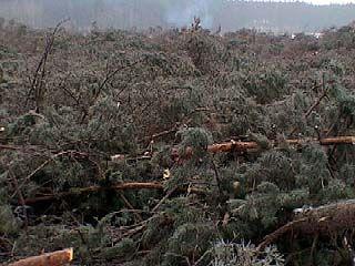 В Коминтерновском районе на месте соснового леса будет песчаный карьер