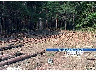 В лесах Репьевского района недавно началась бурная деятельность