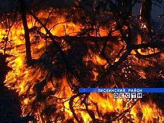В Лисках бушуют лесные пожары