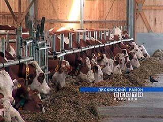 В Лискинском районе коров кормят по-европейски