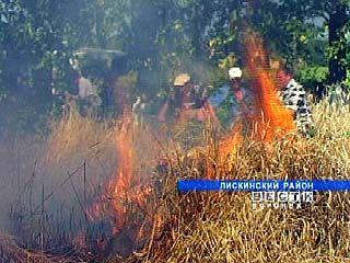 В Лискинском районе огонь уничтожил пять гектаров пшеницы