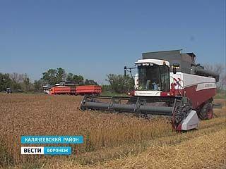В области собрали первый миллион тонн зерна