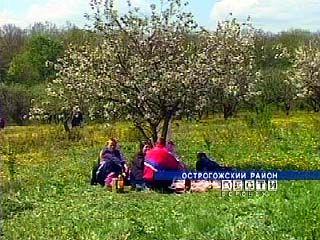В Острогожском районе прошел фестиваль цветущей яблони