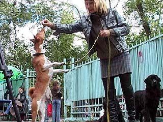 В Парке авиастроителей прошла выставка собак