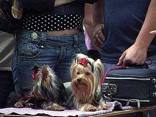 В парке авиационного завода прошла выставка собак