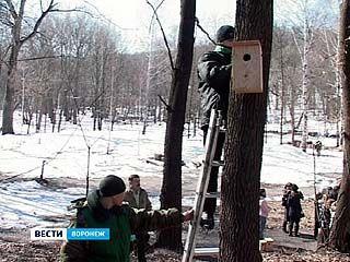 """В парке """"Динамо"""" установили около 60 скворечников"""