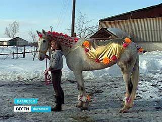 В Павловске 8 марта даже среди лошадей искали красавиц
