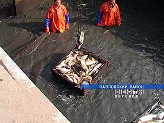 В Павловском лесхозе собрали рыбный урожай