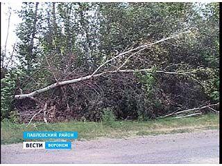 В Павловском районе бесхозные лесополосы стали настоящей проблемой