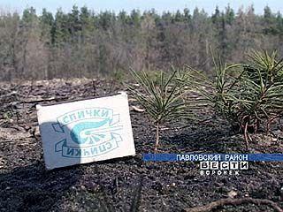 В Павловском районе завершают посадку лесных культур