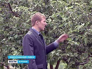 """В плодовых хозяйствах области началась """"диспансеризация"""""""