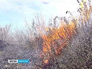 В Подгорном неизвестные подожгли сухую траву - тушить пламя никто даже не пытался