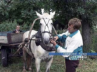 В поселке Сергиевский из транспортных средств осталась только лошадь
